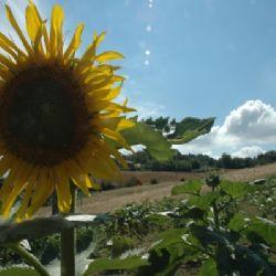 Agriturismo Agronauta